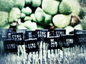 Forêt de transistors
